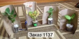 упаковка цветов для пересылки почтой