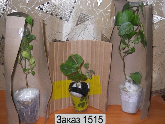 Как упаковать цветы при переезде