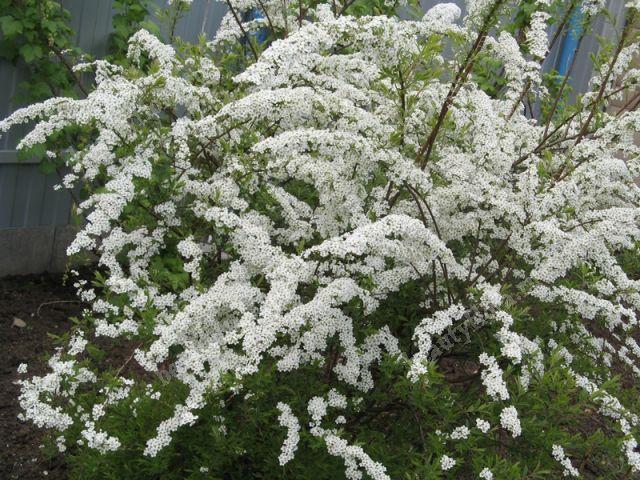 beautyfloraru  Комнатные и садовые цветы почтой по