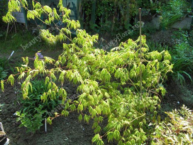 Access beautyfloraru Комнатные и садовые растения и