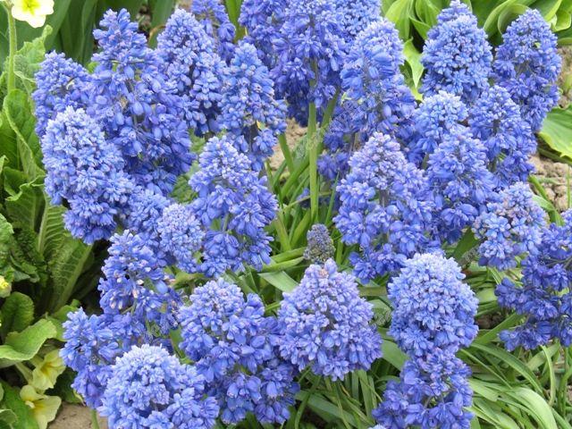 Комнатные растения Интернет магазин BeautyFlora  Цветы