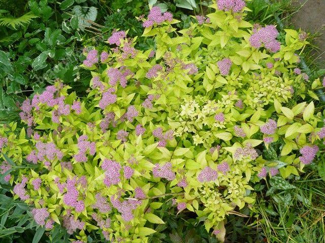 beautyfloraru  Комнатные и садовые растения и цветы
