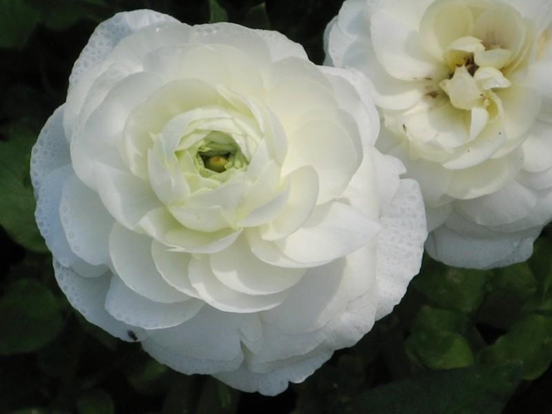 white-9