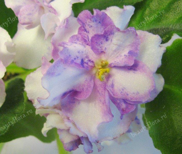enchanted-pink-2