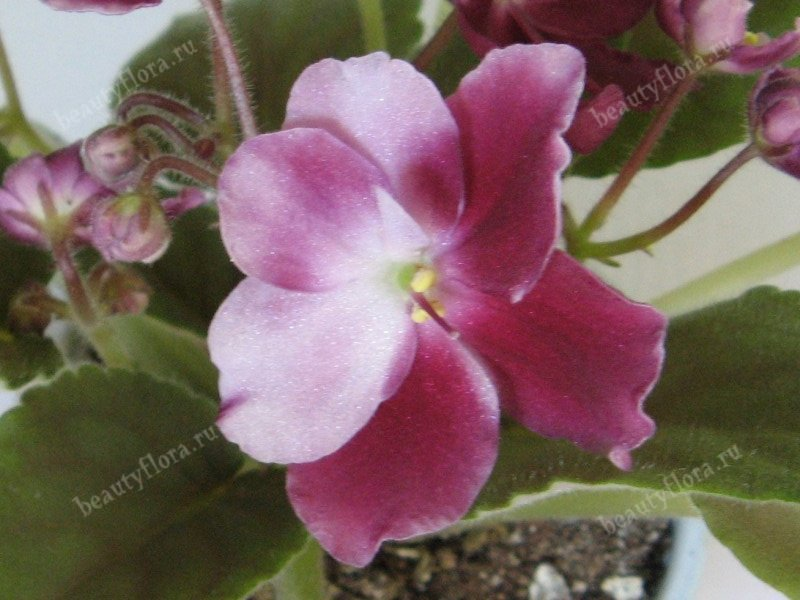 mac-s-southern-springtime-4