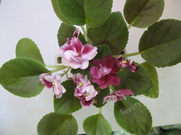 mac-s-southern-springtime