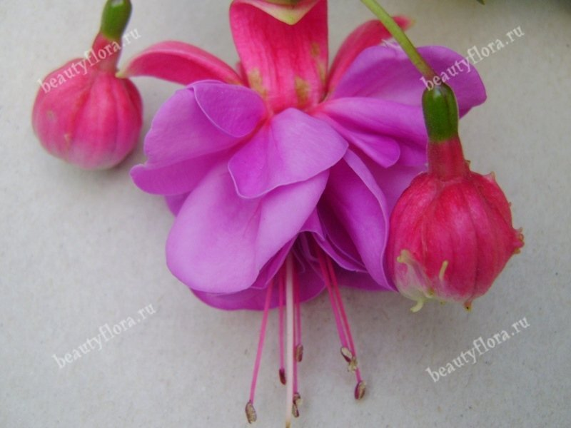 lilas-lustre-2