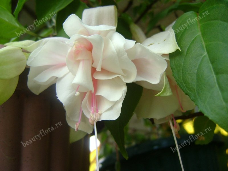 pink-marshmallow-3