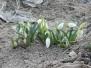Первый день Весны 2014г. Фотосессия в саду