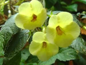 Yellow Beauty08