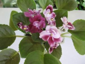 Mac s Southern Springtime (2)