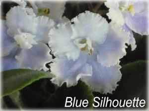 Blue Silhouette (1an)