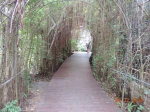 Ботанический сад Пхукет