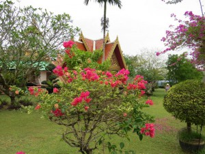 Бугенвиллии у храма, Таиланд