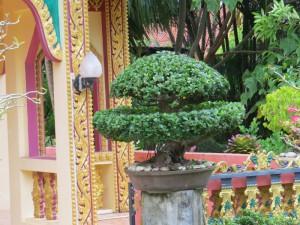 Бонсай у храма, Таиланд
