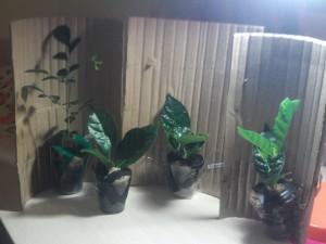 пересылка растений